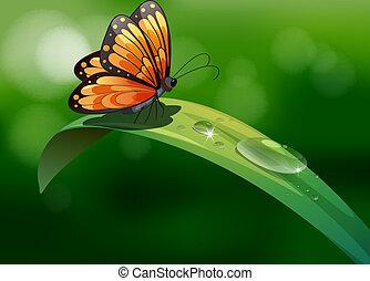 Una mariposa sobre una hoja con gotas de agua