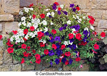 Una muestra floral de petunias multicolores