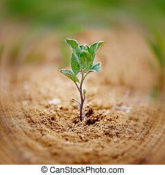 Una pequeña planta verde