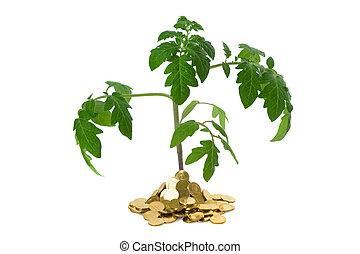Una planta exuberante en montones de monedas