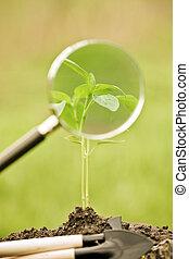 Una planta joven contra la primavera natural