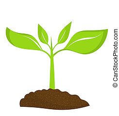 Una planta joven