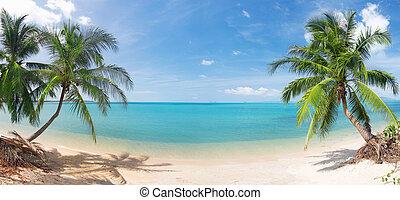 Una playa tropical panorámica con palma de coco