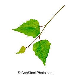 Una rama con hojas verdes