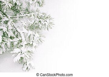 Una rama cubierta de nieve