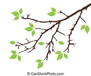 Una rama de árbol