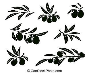 Una rama de olivo