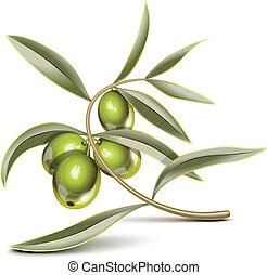 Una rama de olivo verde