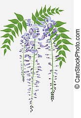 Una rama de wisteria floreciente con permiso