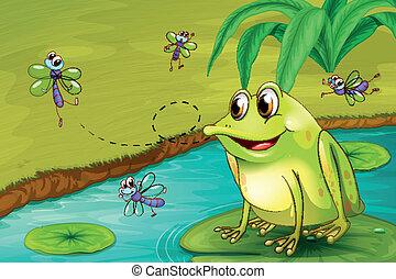 Una rana esperando su comida