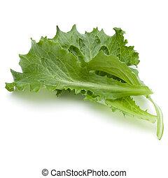 Una toma de un estudio de una hoja de ensalada verde fresca aislada en un fondo blanco.
