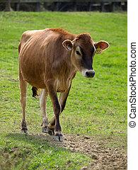 Una vaca en la pradera