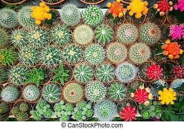 Una variedad de cactus