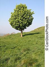 Una vista vertical de un pequeño árbol en un campo inglés.