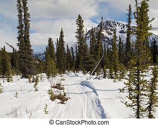 utilizado, invierno, bien, rastro, bosque, boreal