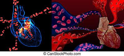 Válvula del corazón 3D con células sanguíneas