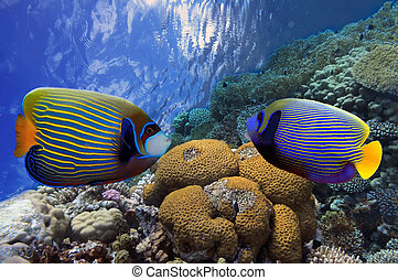 vívido, retoño, arrecife, coral, submarino, peces