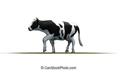 Vaca, aislada en fondo blanco
