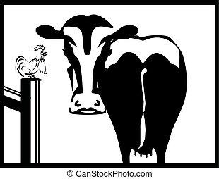 Vaca blanca y negra y un gallo