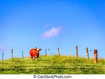 Vaca en una granja