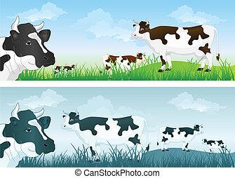 Vaca sobre pradera