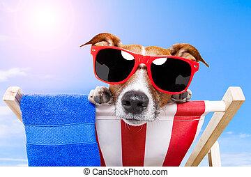 Vacaciones para perros de verano