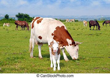 Vacas crías y caballos de pasto
