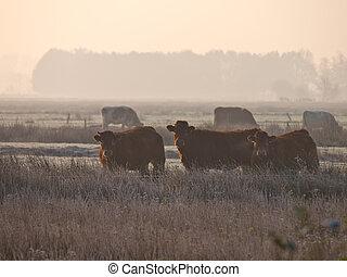 Vacas en la niebla