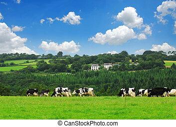 Vacas en un pasto