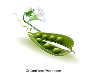 vaina, flor, guisantes