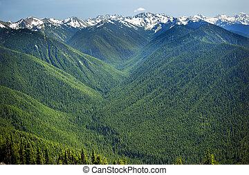 valles, línea, noroeste, washington, montañas, pacífico, nieve, olímpico, hurricaine, caballete, estado verde, nacional, árboles de hoja perenne, parque