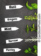 Varios tipos de hierbas con etiquetas de nombre en antecedentes negros