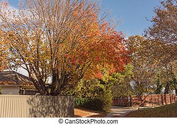 vecindad, otoño, secado, casa, hojas, estados unidos de américa, tejas, techo, entrada de coches, residencial