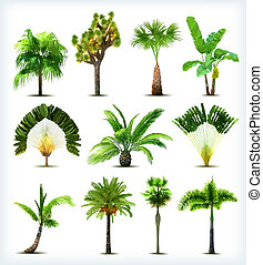 vector, árboles., conjunto, palma, vario