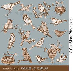 Vector a mano dibujado: aves, variedad de ilustraciones de aves de ave de época