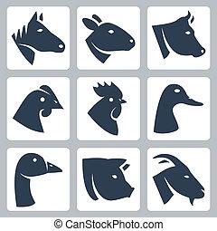 vector, animales, sheep, vaca, domesticado, iconos, cerdo, pato, pollo, ganso, gallo, goat, set:, caballo