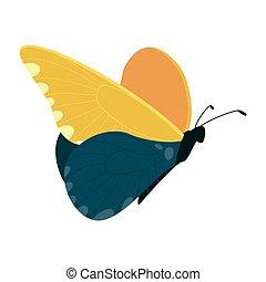 vector, blanco, aislado, mariposa, plano de fondo, hermoso