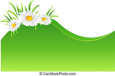 vector, camomila, flor, ilustración