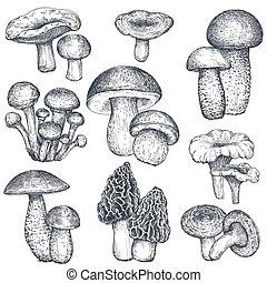 vector, colección, hongos, estilo, mano, dibujado, bosquejo