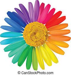 vector, colorido, daisy.