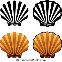 vector, conchas de mar