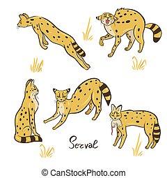 vector, conjunto, fondo., blanco, graphics., aislado, serval