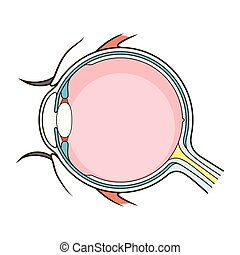 Vector de la estructura ocular humana