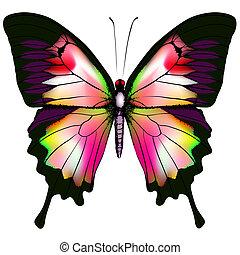 Vector de mariposa aislado