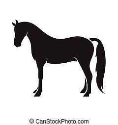 Vector de un caballo aislado en el fondo blanco. Animal.