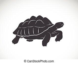 Vector de una tortuga