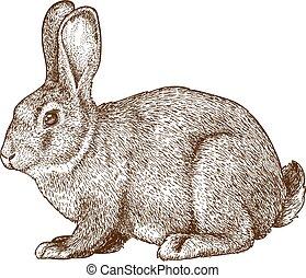 Vector grabado conejo