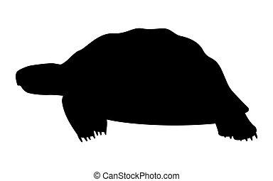 Vector ilustra la silueta negra de una tortuga