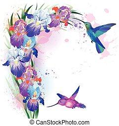 vector, impresión, flores, colibrís, iris