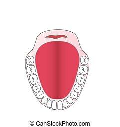 vector, mandíbula, persona, dientes